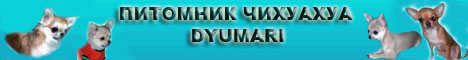 Питомник чихуахуа Dyumari
