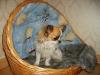 chihuahua-foto18