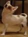 chihuahua-foto24