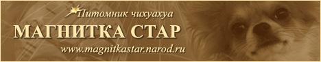 Питомник чихуахуа йорков шпицов МАГНИТКАСТАР