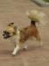 chihuahua-longhaired-Bonya-010